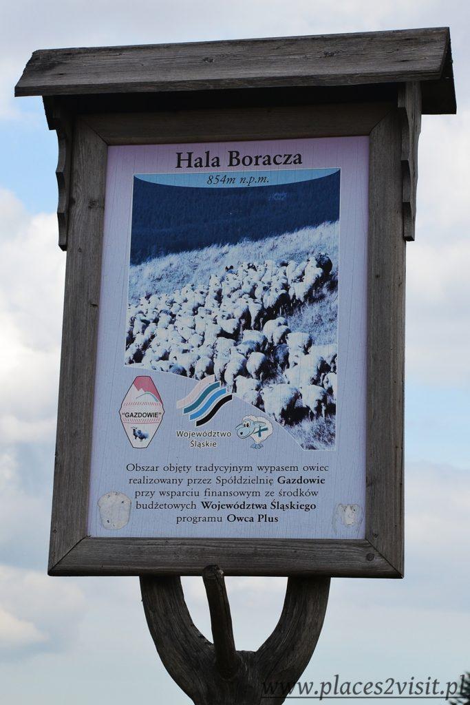 boracza5