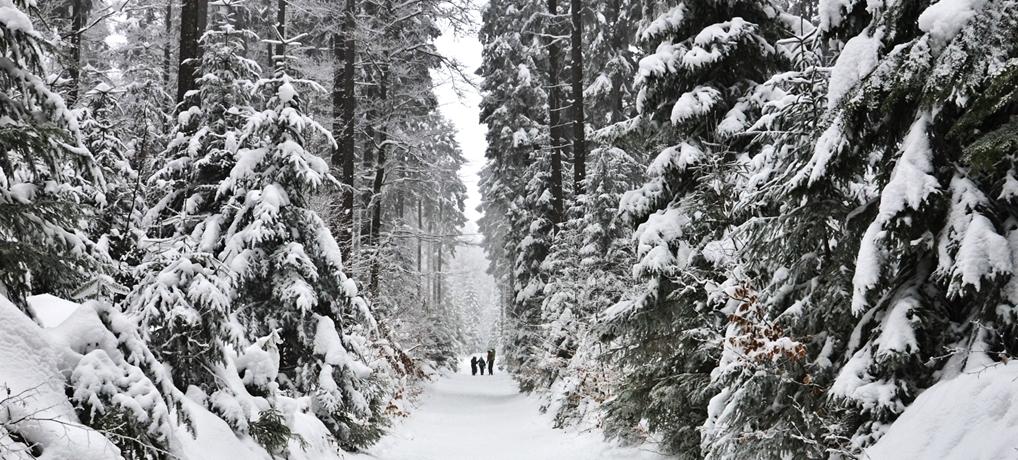 Zima na Rysiance