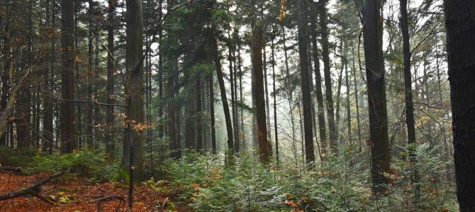 Łysica i jaskinia Raj czyli krótki wypad w świętokrzyskie