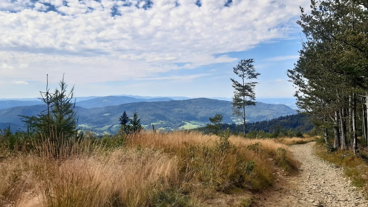 Błatnia, Klimczok i Karkoszczonka – spacerem z Brennej