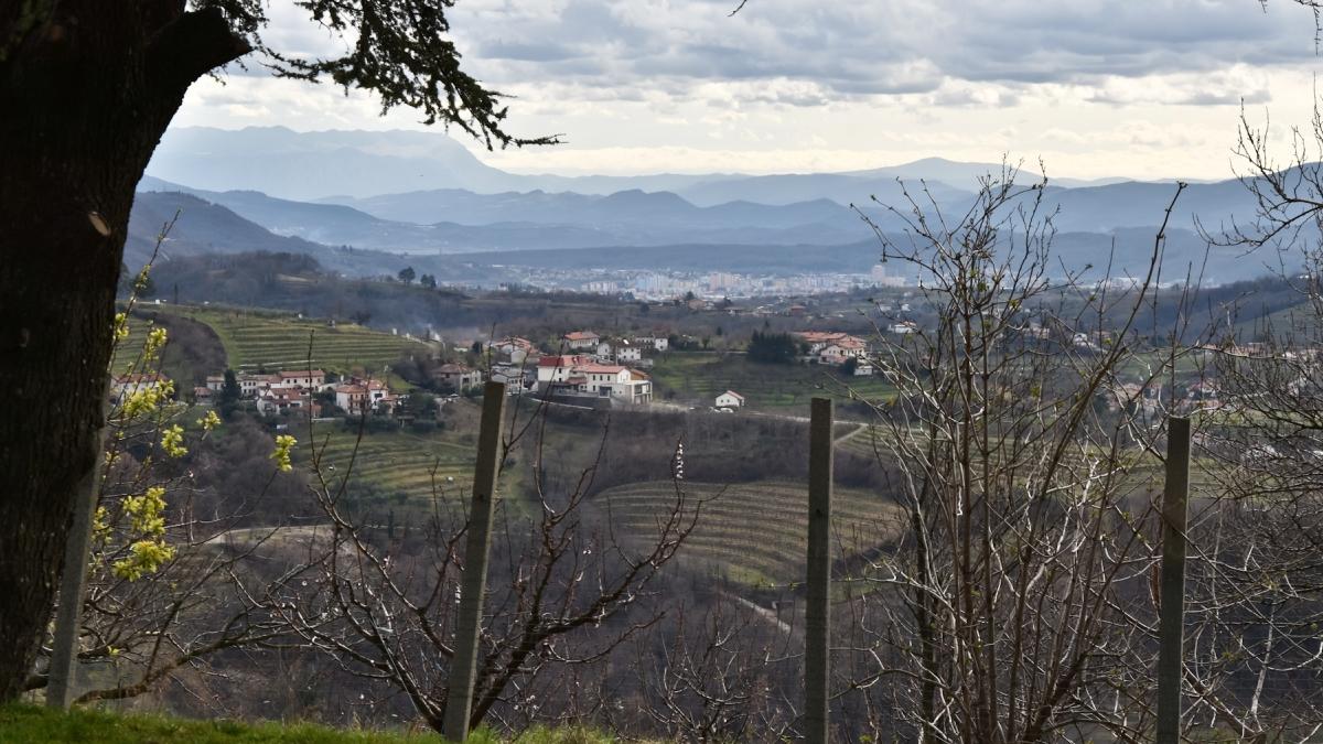 Słowenia winem stoi – winnice Klet Brda i Puklavec Family Wines