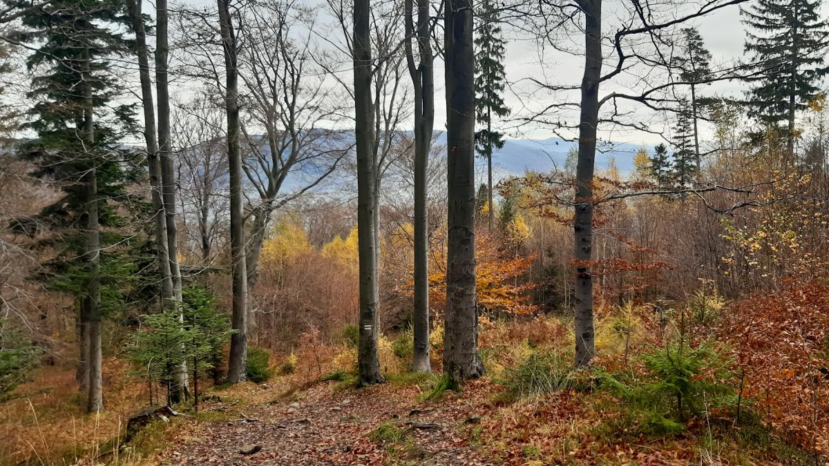Magura, Klimczok i Kozia Góra – spacerem z Bystrej