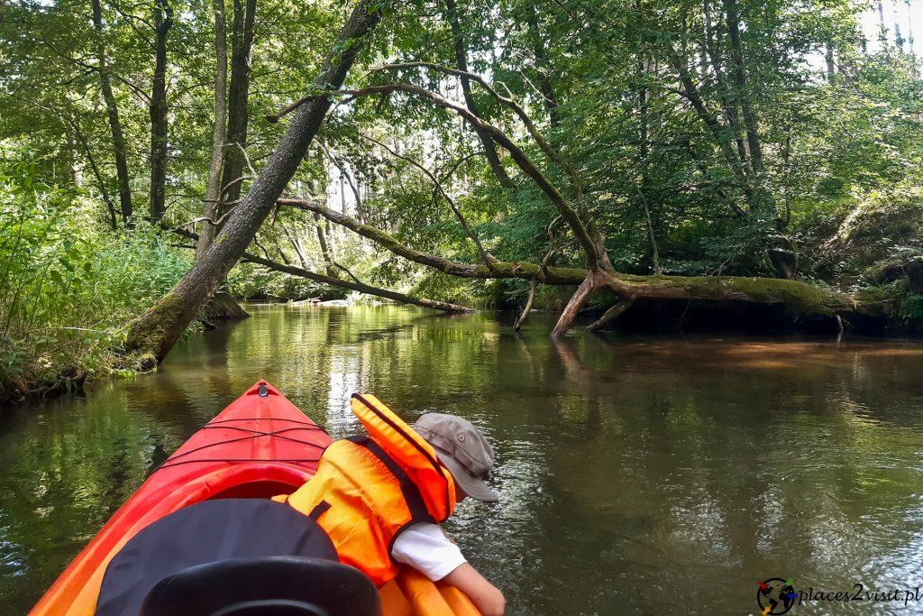 Kajaki na rzece Wda